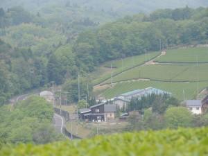 20140514-28吉岡さん茶園